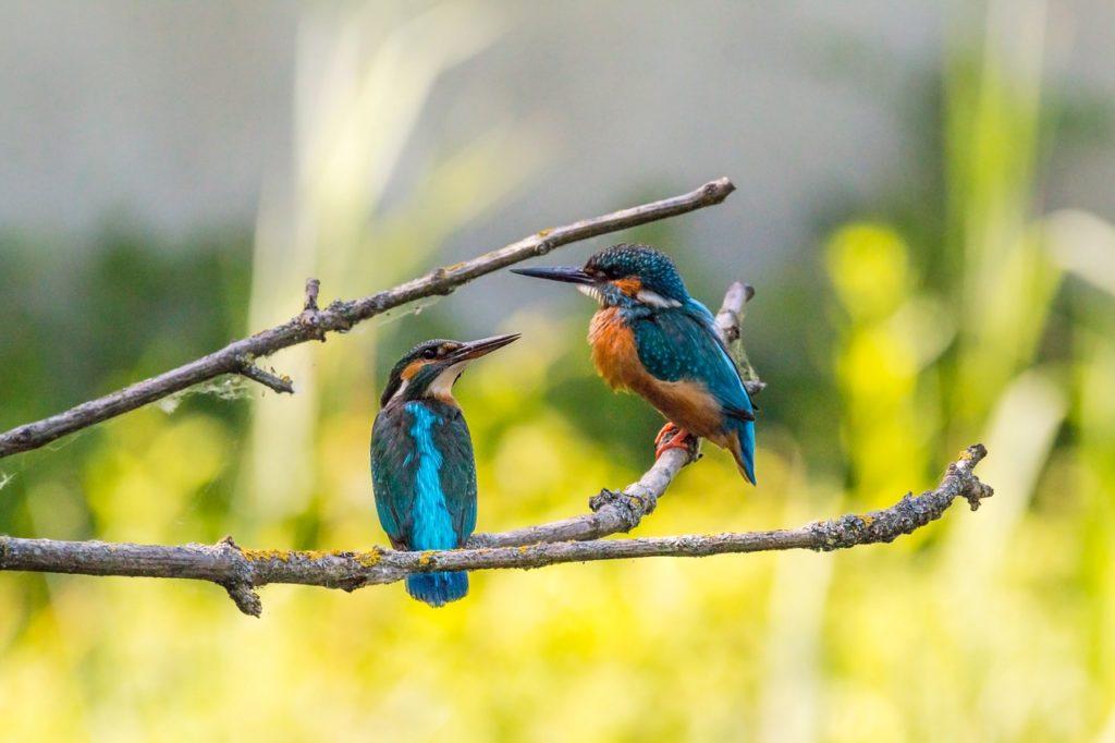 枝に停まる2羽の鳥